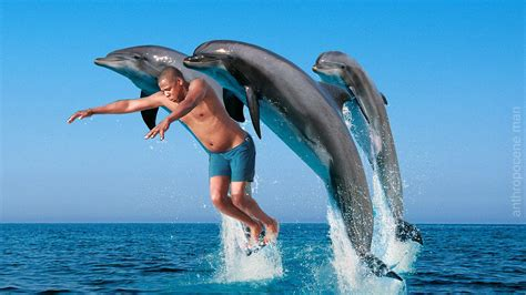 Jay Z Pool Meme - dolphin edition jay z diving know your meme