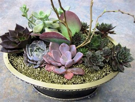 How To Propagate A Succulent Cookie And Kate - original diy succulent dish garden gardenoholic