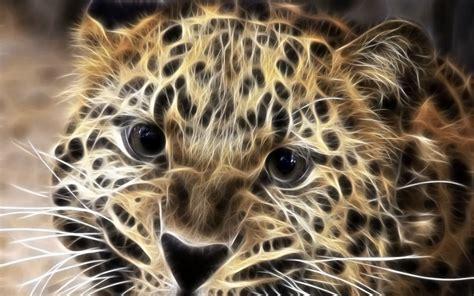 big cat big cats images big cats hd wallpaper and background