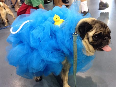 pug costumes for dogs pug loofah costume costumes