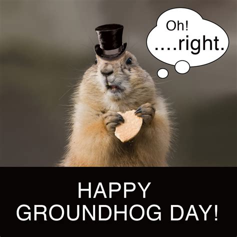 groundhog day how many days did it last groundhog day countdown