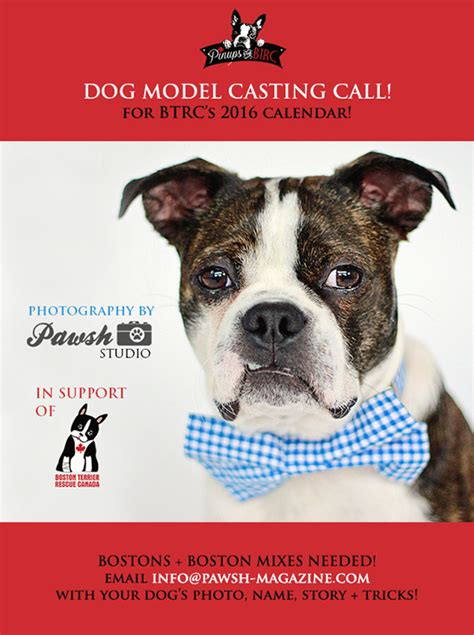 A Call For Model Pets by 2015 Maintense Autos Post