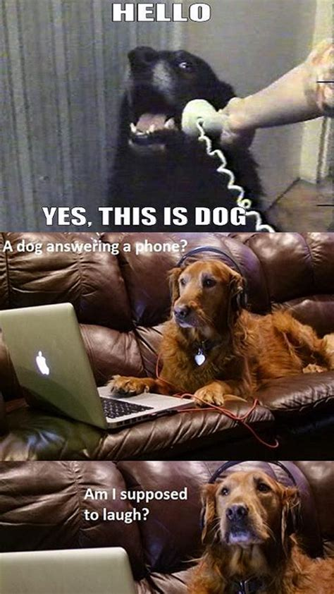 Internet Dog Meme - this is dog memes image memes at relatably com