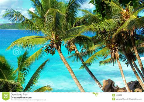 tropical palm trees tropical palm trees and stock photo image 9656030