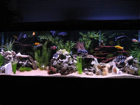 aquarium decoration ideas freshwater most beautiful freshwater tanks all time