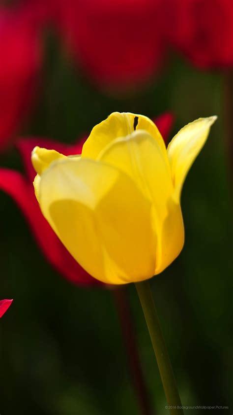 imagenes full hd 1080p para celular 1080x1920 papel de parede flor full hd 1080p papel de