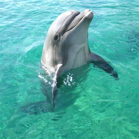 Characteristics | Bottlenose Dolphins