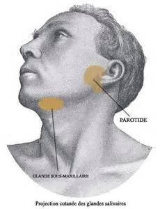 vivre sans thyro 239 de mal au glandes salivaires