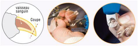 prix pour couper les ongles d un chien m 233 thode pour couper les ongles des animaux