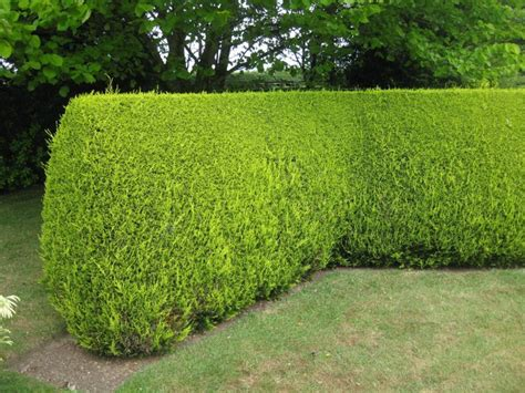 heritage hedging hedge planting tree and shrub planting tree and hedge maintenance