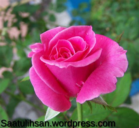 design bunga mawar mawar joy studio design gallery best design