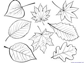 Flash Cards Staples Fall Leaves And Trees Coloring Printables 1 1 1 1