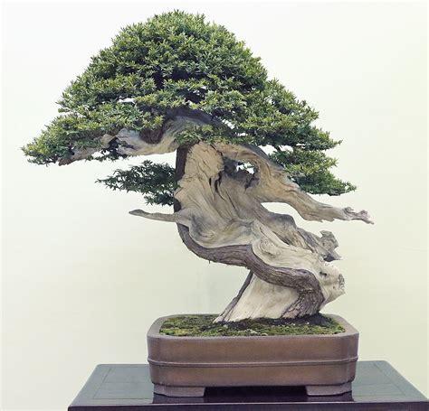 here s a thought bonsai autumn 2014 japan bonsai exploration part 4 valavanis bonsai