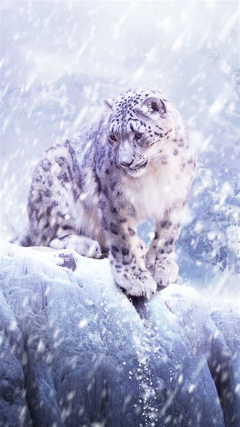 wallpaper iphone 5 leopard snow leopard hunting iphone 5 wallpaper 640x1136