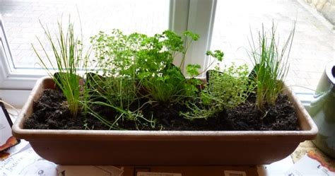 House Plants For Window Sills Parent S Guide Home Gardening