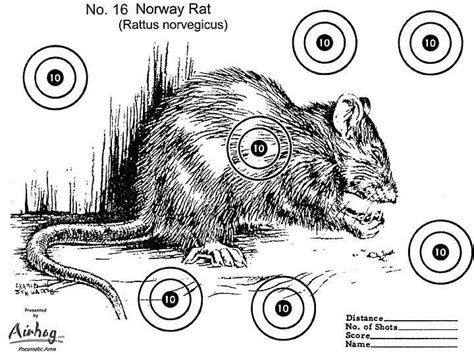 printable animal bb gun targets printable norway rat target shooting targets