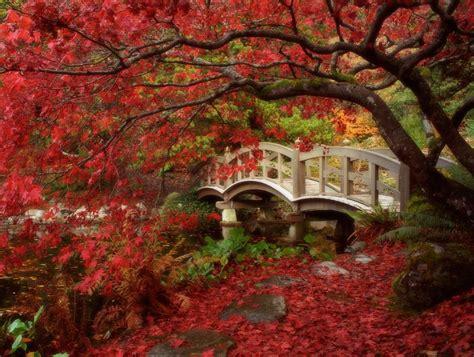 japanese garden japanese zen gardens