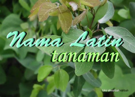 Tanaman Obat Violces daftar nama tanaman obat toko herbal yogyakarta menyajikan