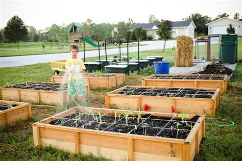 square foot gardening without raised beds experiments no dig gardening square foot gardening
