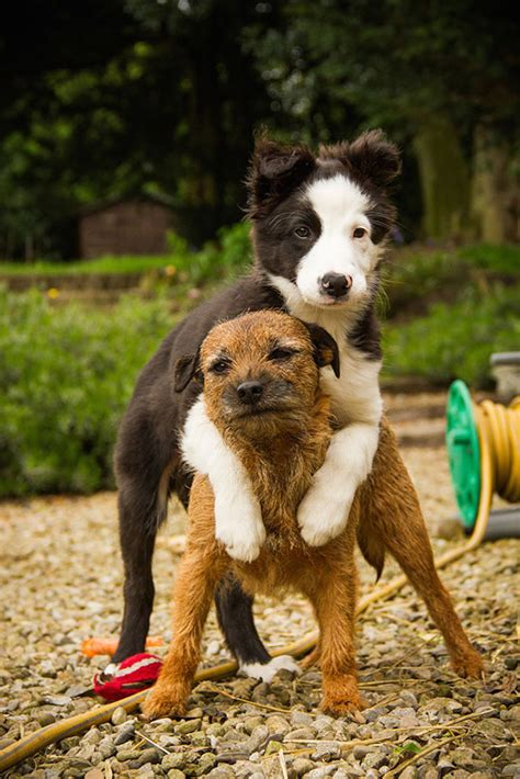 puppy best friends 26 best friends that will melt your
