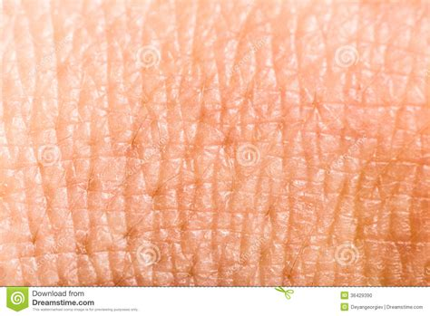human skin texture macro stock photo 293974619 up human skin macro epidermis stock photo image 36429390