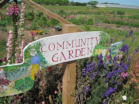 What Is A Community Garden by Help A Community Garden Rebuild The Alliance Of
