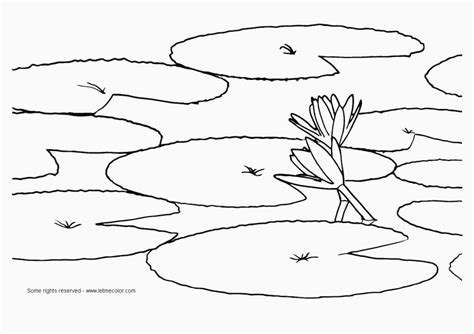 free coloring pages of frog lilypad