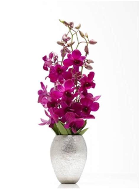 fiori da interni fiori da interno fiorista