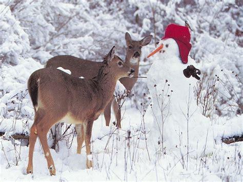 deer and snowman w paper christmas 2008 christmas
