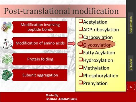 protein glycosylation protein glycosylation