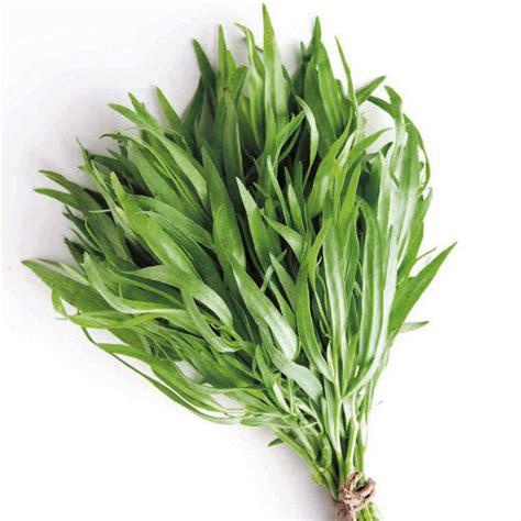 herb plant tarragon herb plants herbs garden dobies