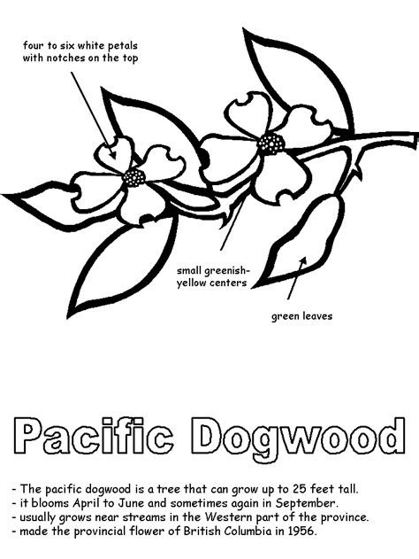 pacific dogwood with labels