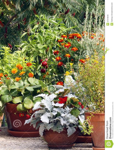 Pot And Container Gardening On The Terrace Or Balc Stock