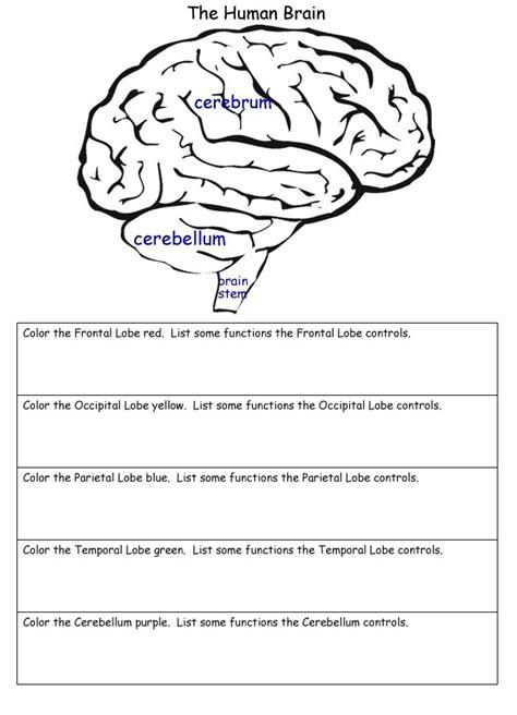 brain diagram worksheet worksheets brain worksheet opossumsoft worksheets and