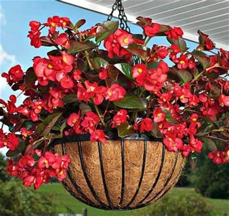 Anting Bunga 01 Warna 70 jenis tanaman hias gantung untuk mempercantik rumah