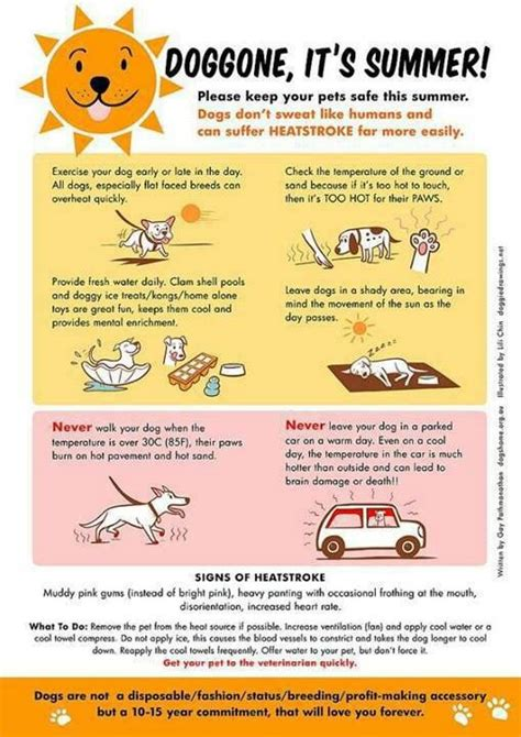 Some Tips For Summer by Summer Pet Safety Tips Summer Dawgs