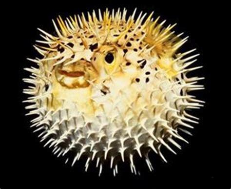 intossicazione alimentare da pesce allergia e intossicazione da pesce due diverse realt 224