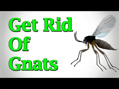 how to get rid of gnats in backyard how to get rid of mosquitoes in house plants house plan 2017