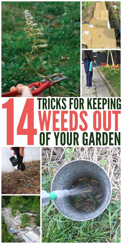 Keep Weeds Out Of Garden 25 best ideas about garden weeds on weeds in lawn killing weeds and cups