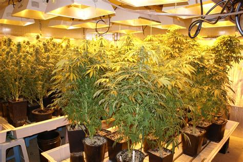 growers house quot my tenant turned my million dollar property into a grow house quot landlord s