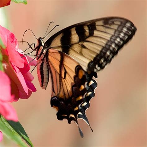 attracting butterflies and hummingbirds to your backyard 1000 images about wild bird care on pinterest wild