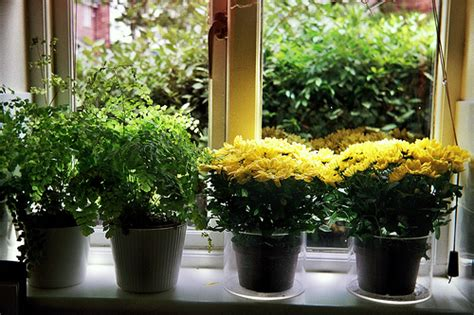 Window Seal Pots Plant Pots On The Window Seal Asgeir Flickr