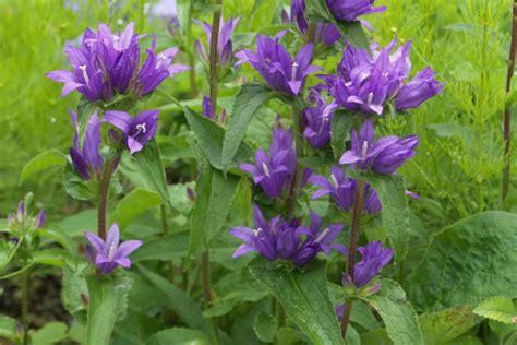 Garten Pflanzen Essbar by Essbare Pflanzen Was Sie Sich Nie Zu Probieren Trauten