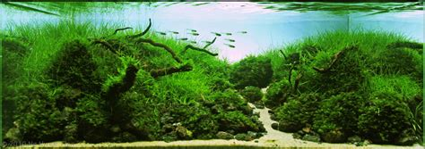 Aquascape Shop by Moko Aquascape Shop Gallery