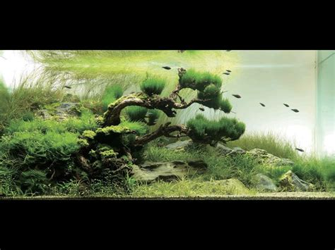 japanese aquascape 10 stunning planted tank set ups that will make you want