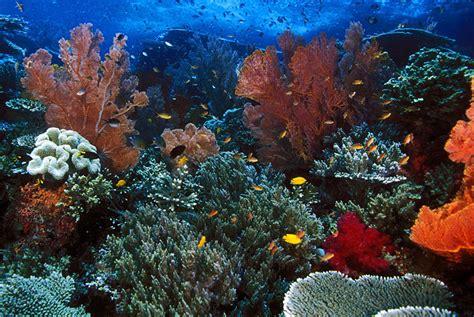 background laut goresan tinta