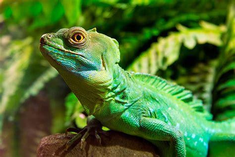 imagenes ojos de reptiles 10 curiosidades de los reptiles que no 191 sab 237 as