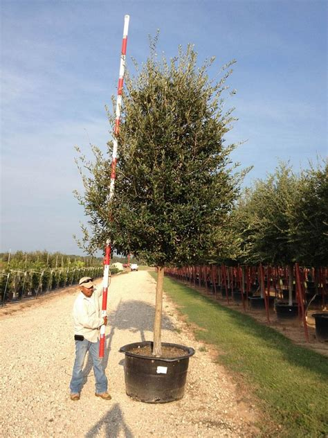 where to get best live tree prices 45g 28 quot