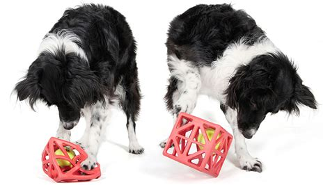 brain toys for dogs will this caged stimulate a s brain or just drive it gizmodo