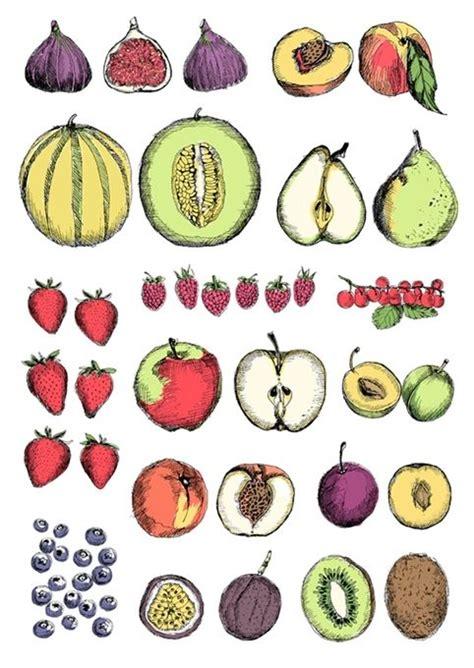fruit  van millingen drawings runs   november